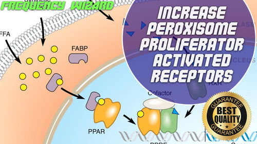 Increase Peroxisome Proliferator-Activated Receptors Fast!