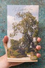 Load image into Gallery viewer, Max Lamb - My Grandfather's Tree