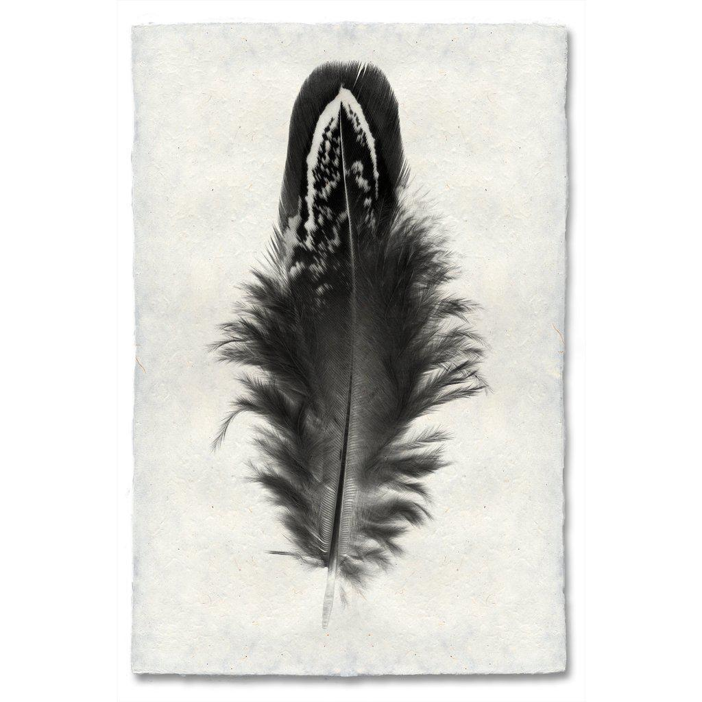 Feather Study #3 - Mallard Duck - Modern Wall Art Print