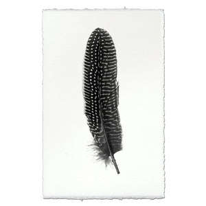 Feather Study #5 - Pheasant - Modern Wall Art Print