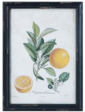 Wood Framed Wall Decor w/ Citrus