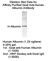 [A01] Goat Anti-Human Albumin Polyclonal Antibody, Academy Bio-medical Company, Inc.