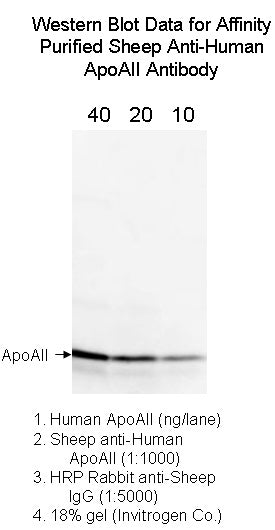 [A05] Sheep Anti-Human Apolipoprotein AII Polyclonal Antibody, Academy Bio-medical Company, Inc.