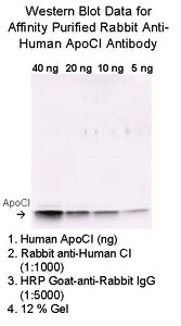 [A09] Rabbit Anti-Human Apolipoprotein CI Polyclonal Antibody, Academy Bio-medical Company, Inc.