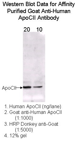[A10] Goat Anti-Human Apolipoprotein CII Polyclonal Antibody, Academy Bio-medical Company, Inc.