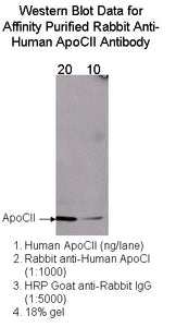 [A11] Rabbit Anti-Human Apolipoprotein CII Polyclonal Antibody, Academy Bio-medical Company, Inc.