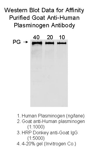[A15] Goat Anti-Human Plasminogen Polyclonal Antibody, Academy Bio-medical Company, Inc.