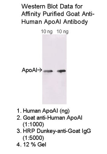 [A03] Goat Anti-Human Apolipoprotein AI Polyclonal Antibody, Academy Bio-medical Company, Inc.