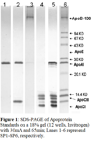 [SP6] Human Apolipoprotein Mix1 SDS-PAGE Standard, Academy Bio-medical Company, Inc.