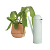 Deuce Pitcher / Watering Can x Earnest Studio & Emilie Pallard