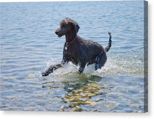 Load image into Gallery viewer, Black Poodle Playing In The Sea - Canvas Print - RW Jemmett