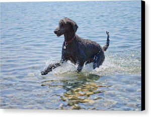 Black Poodle Playing In The Sea - Canvas Print - RW Jemmett