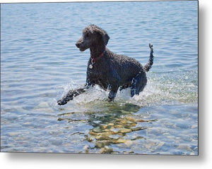 Black Poodle Playing In The Sea - Metal Print - RW Jemmett
