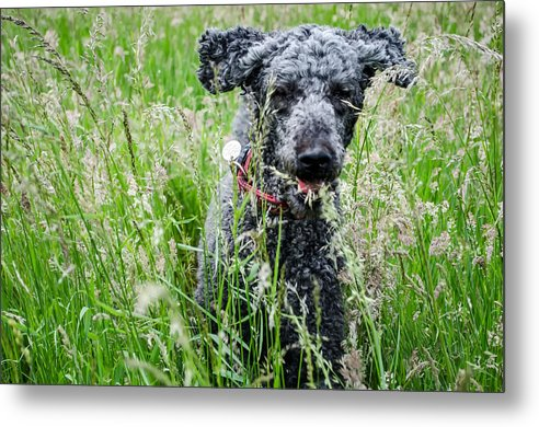 Dog Running Through Grass - Greeting Card