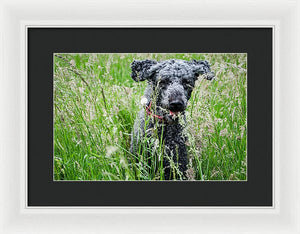 Dog Running Through Grass - Framed Print - RW Jemmett