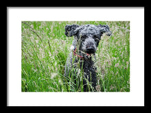 Load image into Gallery viewer, Dog Running Through Grass - Framed Print - RW Jemmett