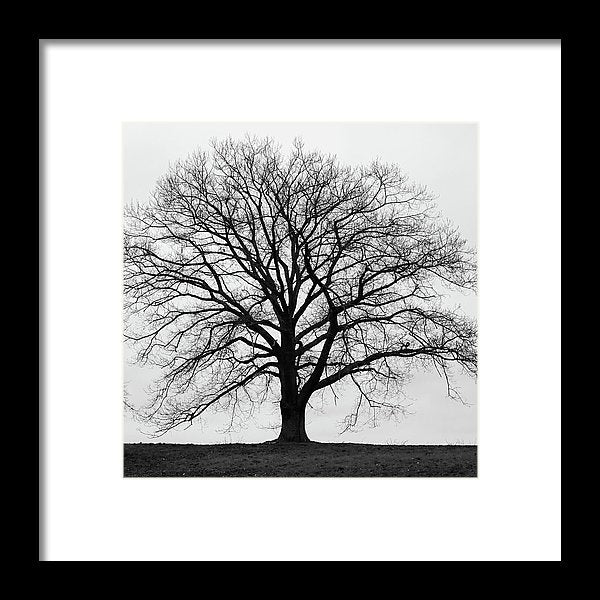 Silhouette Of Large Tree In Monochrome With Grey Winter Skies - Framed Print - RW Jemmett