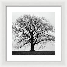 Load image into Gallery viewer, Silhouette Of Large Tree In Monochrome With Grey Winter Skies - Framed Print - RW Jemmett