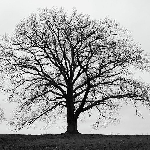 Silhouette Of Large Tree In Monochrome With Grey Winter Skies - Art Print - RW Jemmett