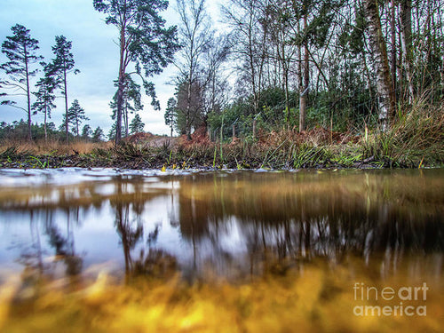 View Across Water And Under Water To Forest Scene - Art Print - RW Jemmett