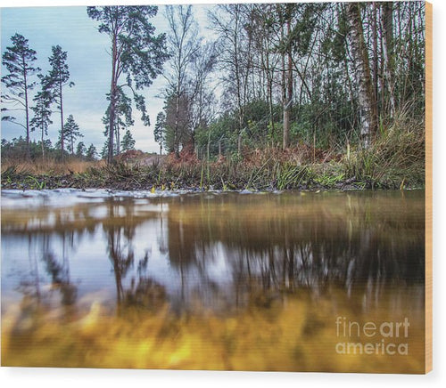 View Across Water And Under Water To Forest Scene - Wood Print - RW Jemmett