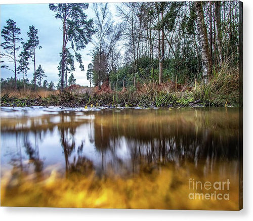 View Across Water And Under Water To Forest Scene - Acrylic Print - RW Jemmett