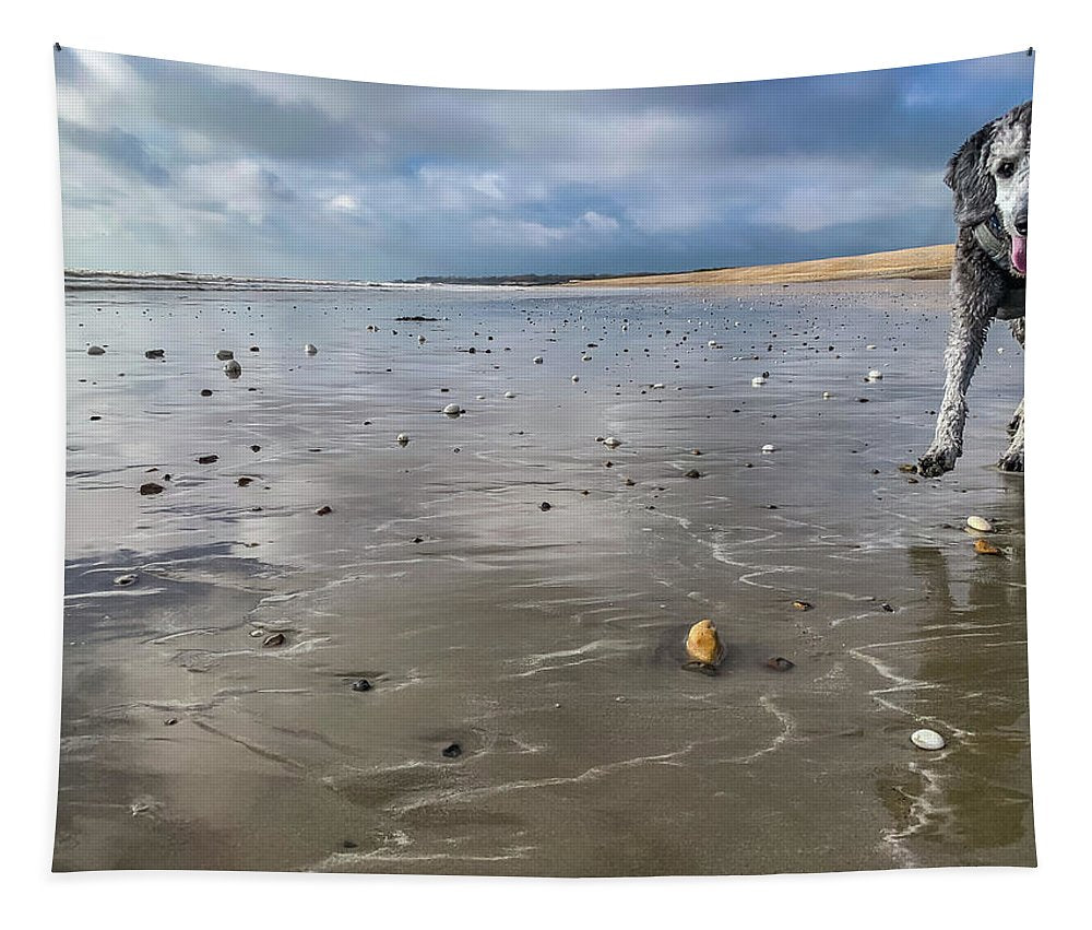 Young Silver Poodle On A Wet Sandy Beach - Tapestry - RW Jemmett