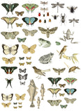 "IOD Entomology Etcetera Decor Transfer 24"" x 33"""