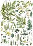 "IOD Fronds Botanical Decor Transfer 24"" x 33"""
