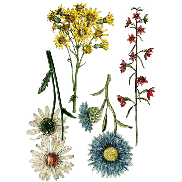 "IOD Wild Flower Botanicals Decor Transfer 24"" x 33"""