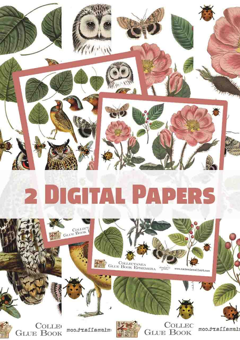 2 Pages - Collectanea Vintage Digi Paper set 2