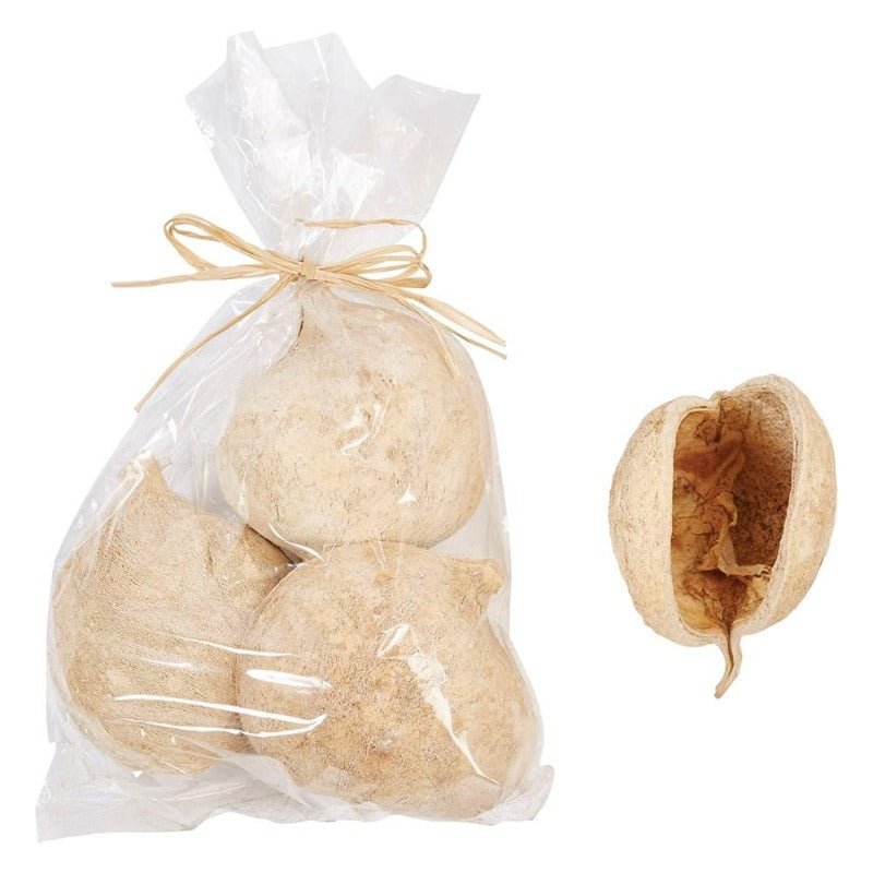 Dried Natural Buddha Nut - 3 pieces