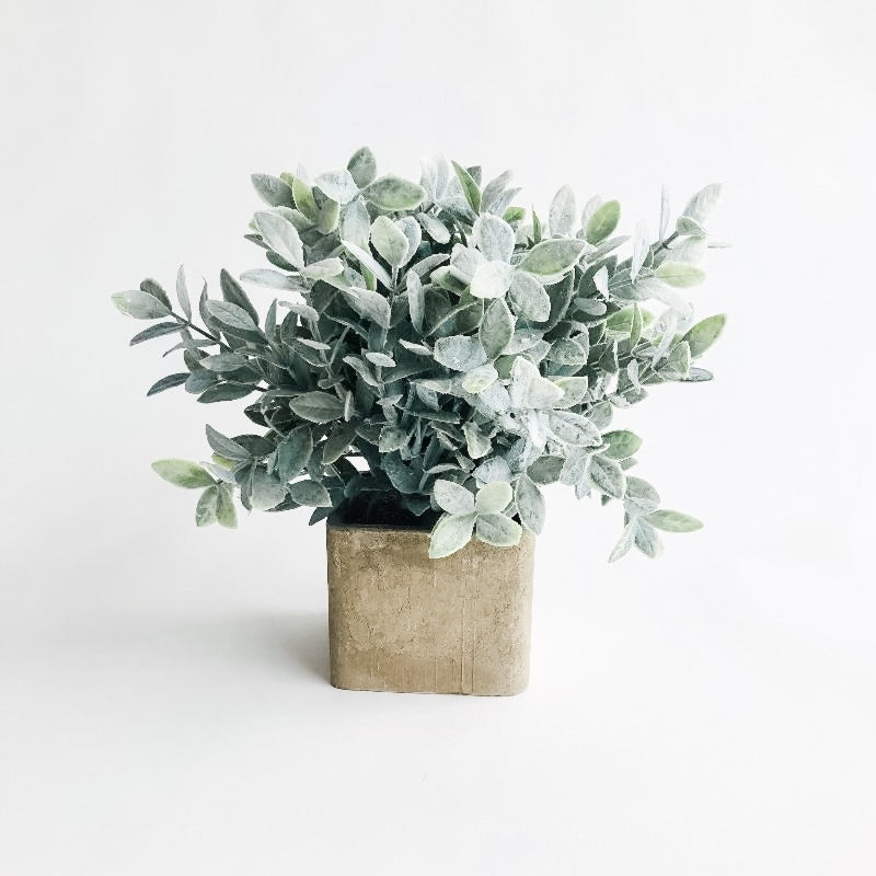 Sage in Square Cement Pot