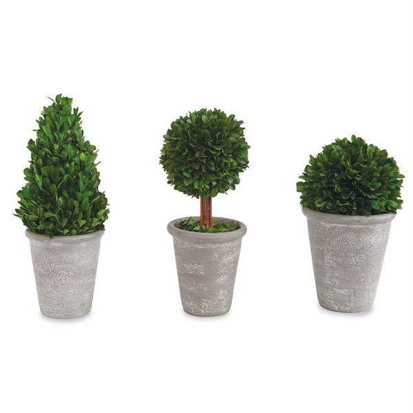 Preserved Boxwood Topiary in Grey Pot