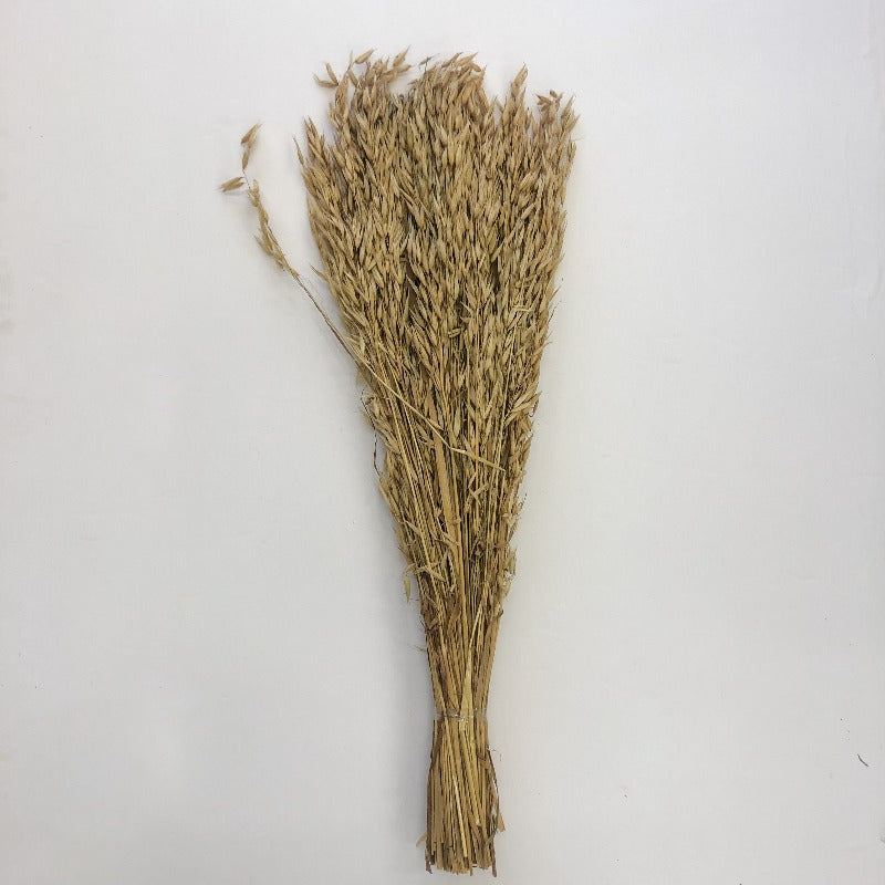 Natural Sea Oat Stems