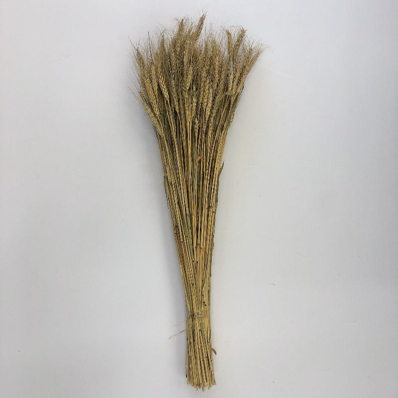 Natural Wheat Stems