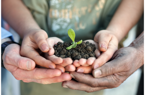 Hands holding soil with a seedling growing out.