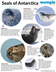 Seals of Antarctica printable