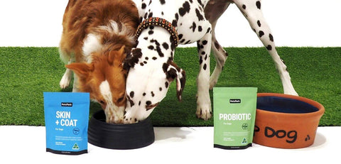 petz park allergy duo, probiotics for dogs, skin and coat supplement for dogs