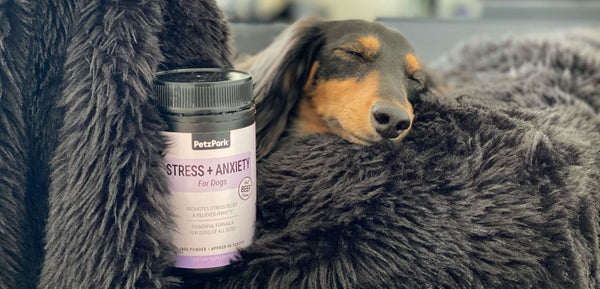 dachshund dog with Petz Park stress and anxiety for dogs
