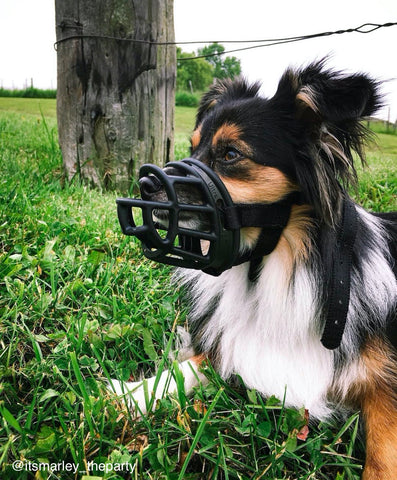 basket dog muzzle or soft dog muzzle which one is more suitable
