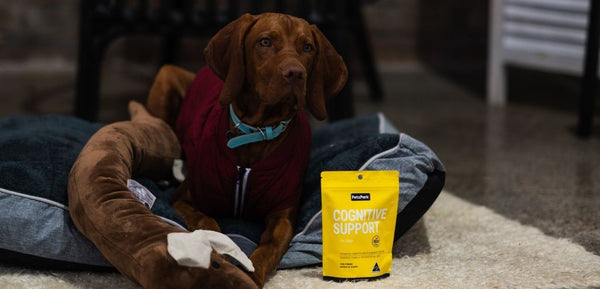hungarian vizsla and cognitive brain health support for dogs