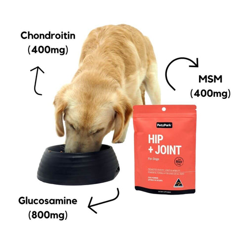 hip and joint for dogs with glucosamine msm and chondroitin