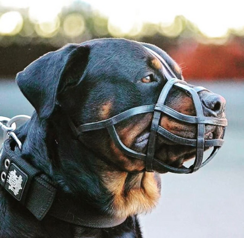 the best dog muzzles and the different types explained