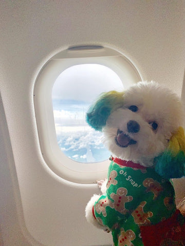 Dog on plane, dog holiday, top dog destinations