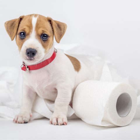 cute dog toilet roll mess