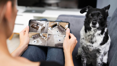 smart pet home device, dog camera, stay at home dog