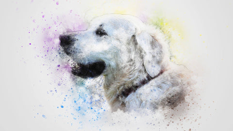 pet portraits, painting of dogs, dog drawing, drawing of dogs