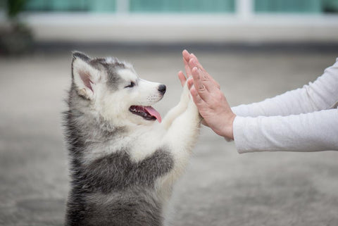 Dog high five, happy dog, human and dog, dog separation anxiety treatment