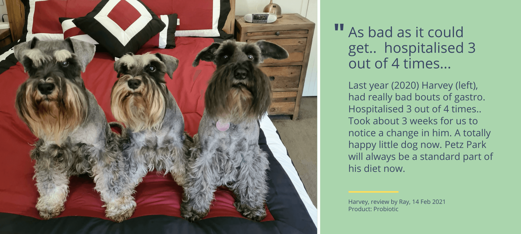 a customer review of Petz Park's Probiotics for dogs by a miniature schnauser's owner.